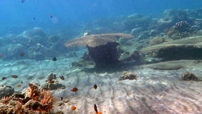 Coral reef alive with marine life and shoals of fish stock video footage