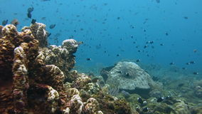 Coral reef alive with marine life and shoals of fish stock footage