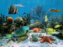 Free Coral Reef And Starfish Royalty Free Stock Image - 25592546