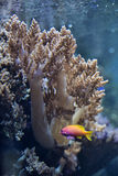 Coral reef in the aquarium Stock Photo