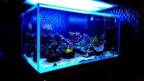 Coral Reef Aquarium Tank Scene stock afbeelding