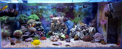 Coral Reef Aquarium Tank Scene Stock Photo