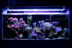 Coral Reef Aquarium Tank Scene Royalty Free Stock Images