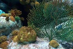 Aquarium coral reef. Coral reef in aquarium in thailand Stock Photo