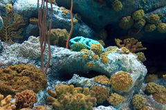 Aquarium coral reef. Coral reef in aquarium in thailand Royalty Free Stock Photography
