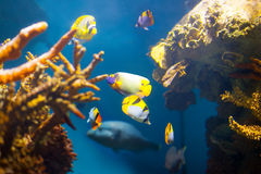 Coral reef area Stock Photography