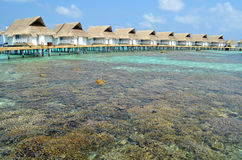 Coral reef around the Luxury Water Villas. On the crystal water stock photography