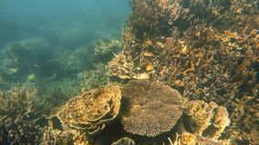 Coral reef in Australian sea. A slow motion underwater moving shot a variety of corals on a sea in Australia stock footage