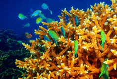 Coral reef background Stock Photo