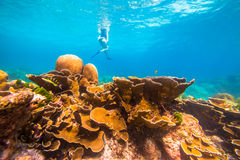 Coral reef background Royalty Free Stock Image