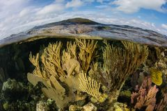 Coral Reef baja en el mar del Caribe Imagenes de archivo