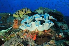 Coral Reef Bali Stock Afbeeldingen