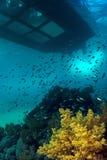 Coral Reef & barca con fondo di vetro Fotografia Stock Libera da Diritti