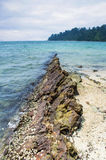 Coral Reef in The Beach Royalty Free Stock Photo