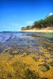 Coral reef next to shore Stock Images
