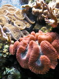 Coral reef Stock Image