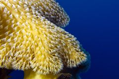 Coral reef with beautiful great soft coral at the bottom of tropical sea Stock Photo