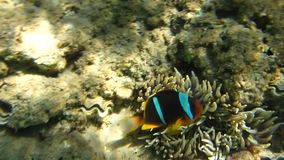 Coral reef. Beautiful nature, beautiful places in the world corals and fishes stock video