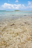 Coral reef, Belize. Royalty Free Stock Photography