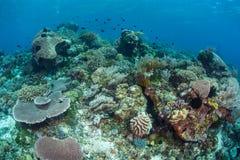 Coral Reef Biodiversity immagini stock libere da diritti