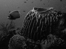 Coral reef in black and white Royalty Free Stock Photo