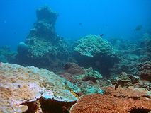 Coral reef in blue sea. Underwater view of coral reef formations in clear clue sea off Adaman beach, Thailand stock photo