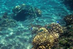 Coral reef in blue sea water. Tropical seashore inhabitants underwater photo. Royalty Free Stock Photos