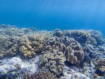 Coral reef and blue sea water. Coral reef underwater photo. Tropical sea shore snorkeling or diving. Undersea wildlife of coral reef and marine animals. Sea stock images