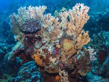 Coral reef Bonaire Royalty Free Stock Photo