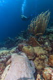 Coral reef bonaire Stock Image