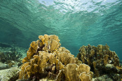 Coral reef, Bonaire Royalty Free Stock Photos