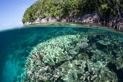 Coral Reef bonita e ilha tropical Foto de Stock Royalty Free