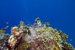 Coral reef on the bottom of red sea Stock Photo