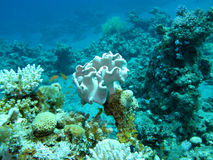 Coral reef at the bottom of tropical sea, underwater Stock Photos