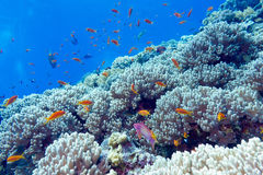 Coral reef at the bottom of tropical sea, underwater Royalty Free Stock Photography