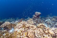 Caribbean coral reef Stock Photography