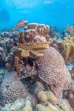 Caribbean coral reef Royalty Free Stock Photos
