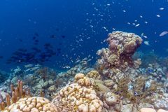 Caribbean coral reef Royalty Free Stock Photo