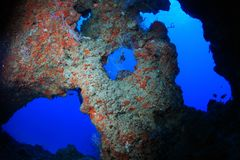 Coral reef cave Royalty Free Stock Photo