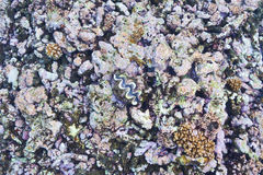 Coral reef. And clam at Seychelles Royalty Free Stock Photos