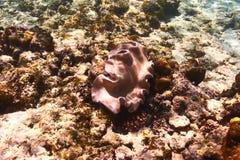 Coral reef. Close up at Seychelles Royalty Free Stock Image