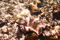 Coral reef. Close up at Seychelles Royalty Free Stock Photography