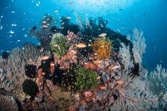 Coral Reef colorée et diverse Images stock