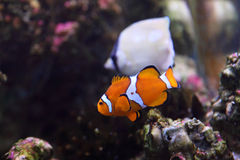 Coral reef and colorful fish Stock Photo