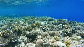 Coral reef, colorful fish groups
