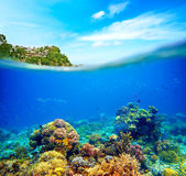 Coral reef, colorful fish and sunny sky shining through clean oc Stock Photos