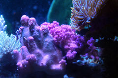 Coral Reef. Colorful coral reef plants and animals stock photography