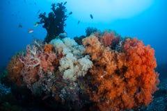 Coral Reef colorida e vibrante no Pacífico Imagem de Stock