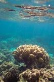 Coral Reef colorida na ilha de Lipe em Tailândia Fotos de Stock