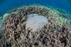 Coral Reef Competition Lizenzfreies Stockfoto